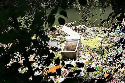 Due anni di Raggi e zero manutenzione del verde a Roma